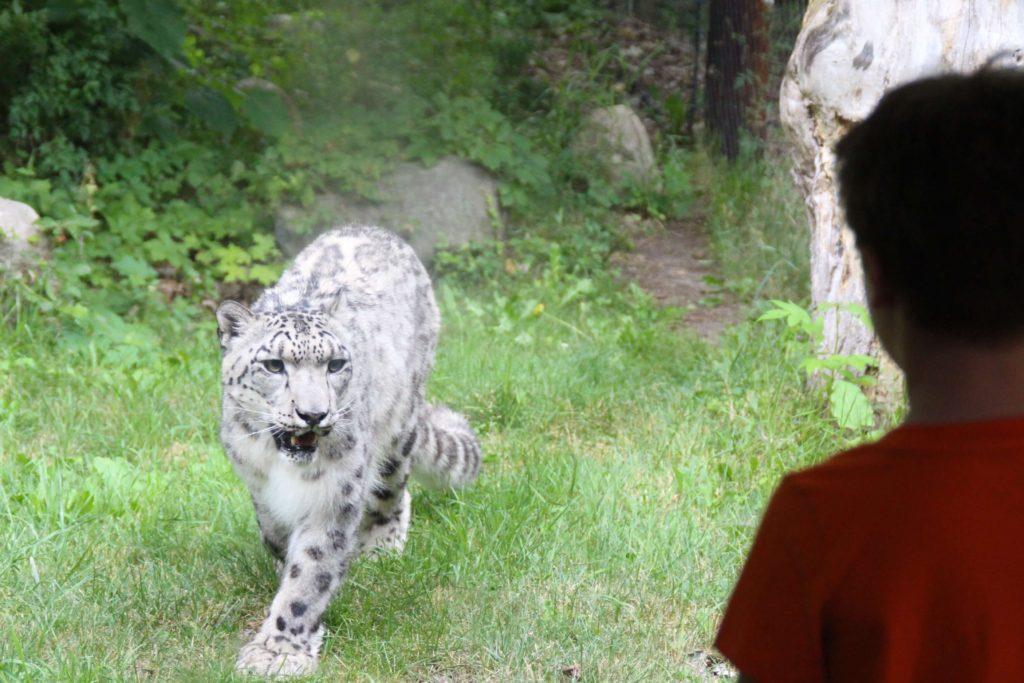 snow leopard 6