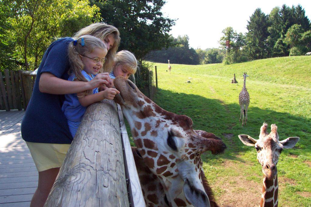Mother&ChildFeedGiraffe