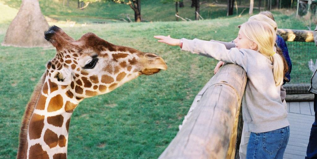 giraffe-feeding-wmta-2-1024x513_1518559004